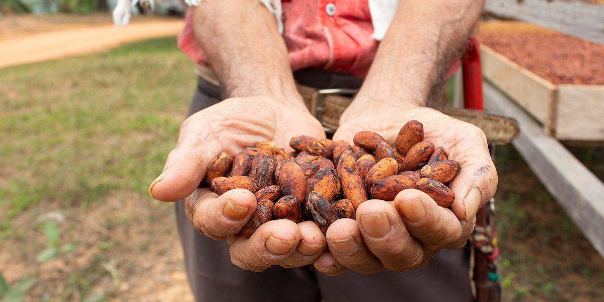 Un desplazado interno muestra granos de cacao producidos con el apoyo del JRS en el Magdalena Medio, Colombia.
